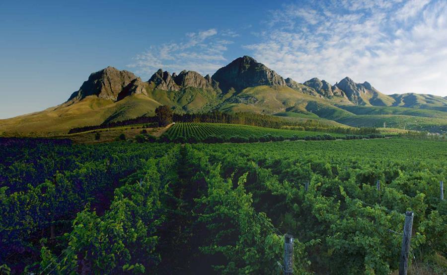 Lourensford Vineyards