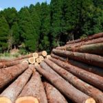 FORESTRY: A CLIMATE-FRIENDLY INDUSTRY