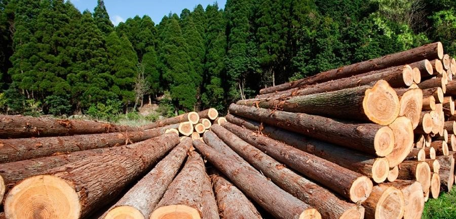 forestry a climate friendly industry