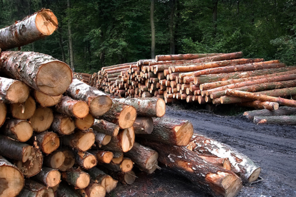 FORESTRY POISED FOR AN UPSWING
