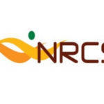 TIME WILL BE THE TRUE TEST OF NRCS CLAMPDOWN IN SA